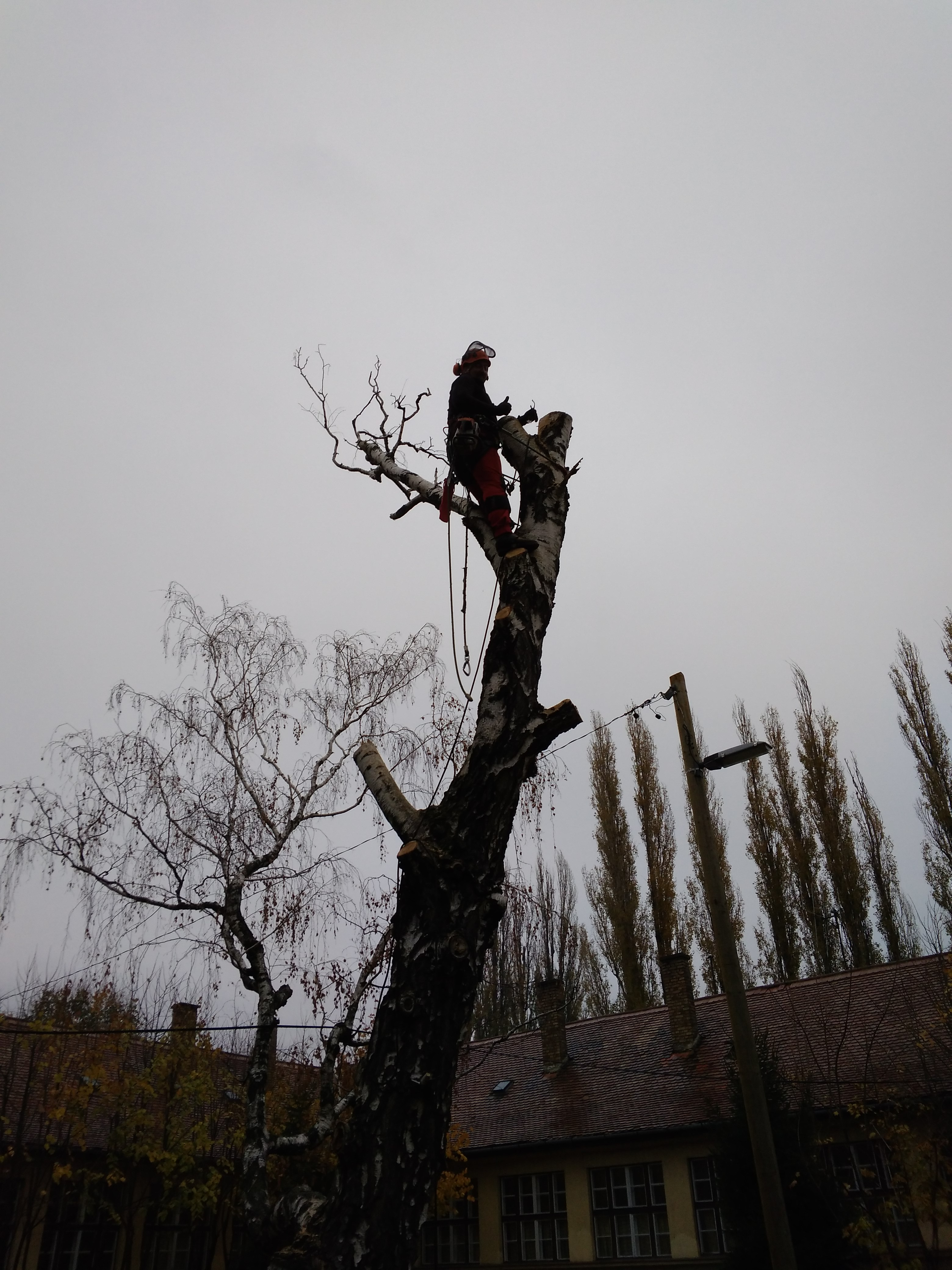 Veszélyes fák kivágása baranya megye
